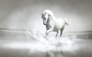 White-Horse-horses-35203666-1920-1200